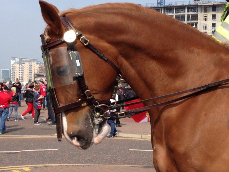 馬に装着したブライドルの画像